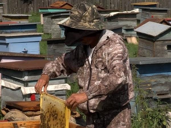 «Марий Эл Телерадио»: Пчеловод