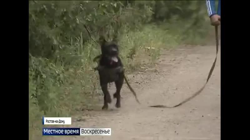 Запрет на свободный выгул. О новых поправках в «Правила содержания собак и кошек»