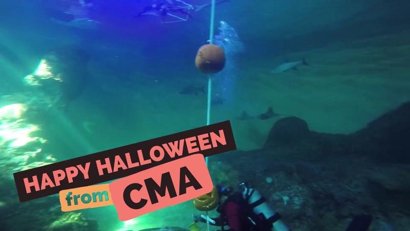 Happy Halloween Sea Turtle Pumpkin Enrichment