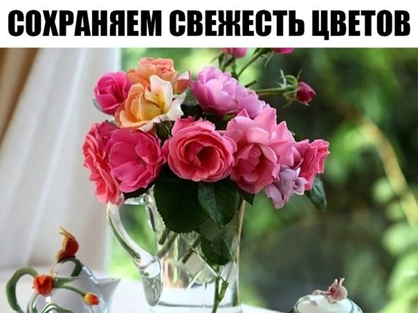 Сохраняем свежесть цветов Как любая женщина, я обожаю, когда мне дарят цветы. Хочу поделиться с вами несколькими секретами, как сохранить цветам долгую жизнь.Всегда следует удалять листья с той
