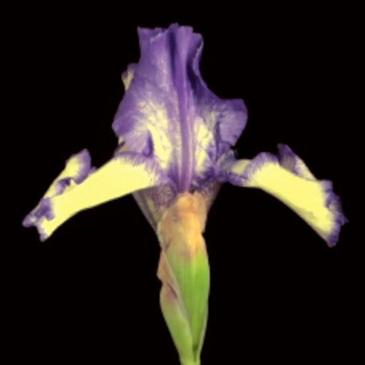 Мастер альбом Flower