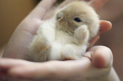Cute fluffy baby animals