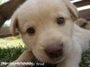 Возможно,собаки — это последние ангелы,которые остались с людьми на земле…