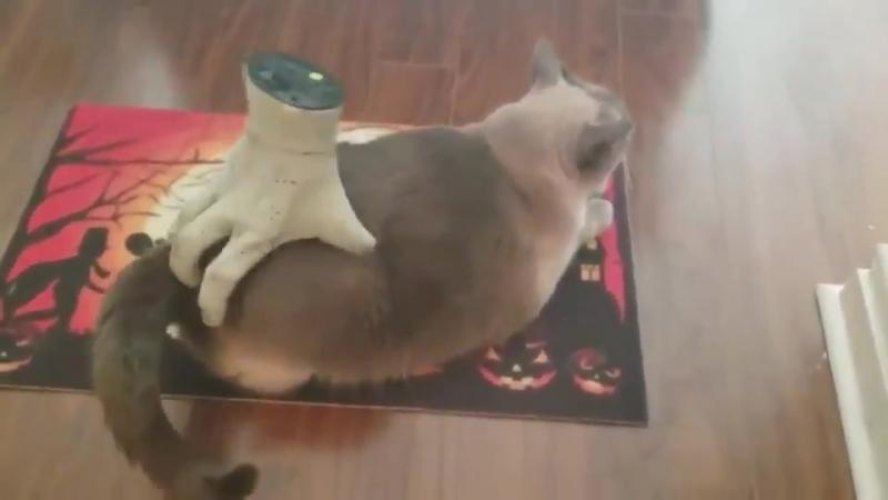 Гаджет - cat hilarious butt