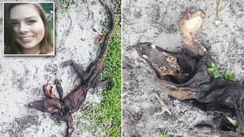Mystery creature's carcass discovered in Florida woman's backyard sets Twitter alight