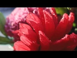 Canon EOS RP Sample Video - RED in Ordinary Life