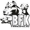 Питбули БРЭЙВ ФАЙТЕР * BRAVE FIGHTER'S pitbulls