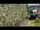 технология выращивания яблоневого сада