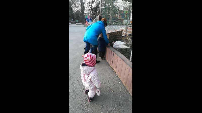 Лукоморье индюк весна 2018