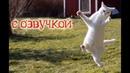 Приколы с котами и Смешная озвучка от Domi Show Кот Мурзик Приколы 2018
