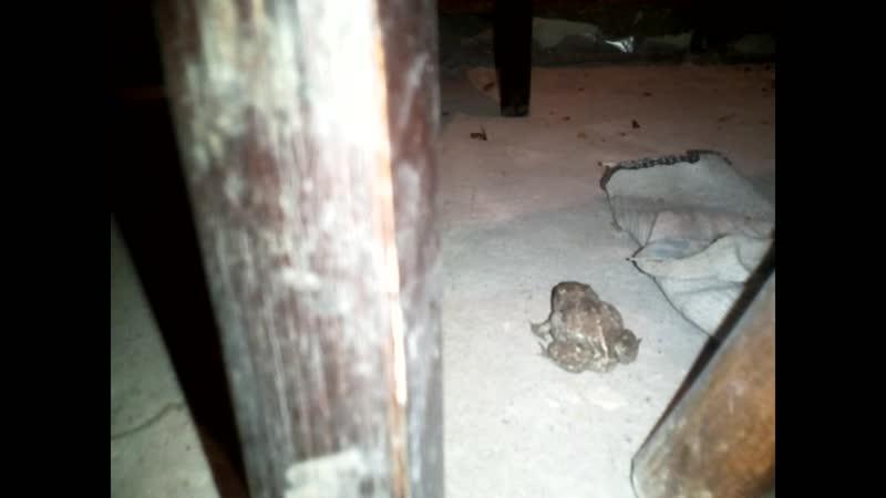 Котенок и жаба