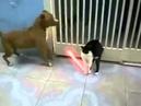 Cat Vs Dog Star Wars edition Jedi miao funny