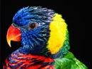 """Схемы вышивки. pleasurik.  Вышивка крестом.  Схема вышивки  """"Попугай """"."""