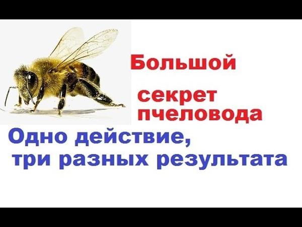 Как разовым расширением гнезда пчёл, получить три разных результата