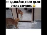 Не сдавайся если даже ооочень страшно ))))))))))))