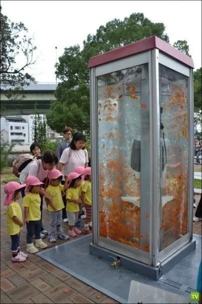 Это обычная телефонная будка, из которой сделали аквариум с золотыми рыбками Вместо того, чтобы просто демонтировать ставший ненужным предмет обихода, из него сделали арт-объект.Такая красота