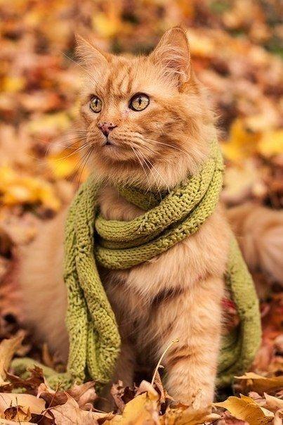 Осень и кошка