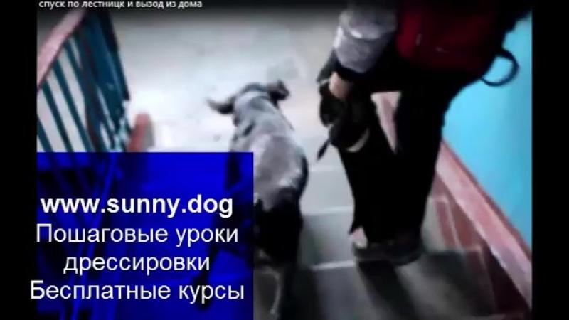 Пес тянет когда выходите из дома отучаем собаку тянуть на ступеньках