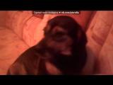 «Со стены друга» под музыку а хде мая сасиска - А где моя сосиска!? кот сожрал собака сабака кот сабака. Picrolla
