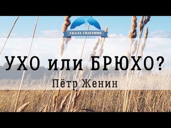 Женин Пётр тема Ухо или брюхо