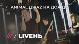 концерт Animal Jazz на