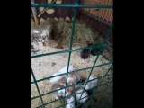 Ярославль, зоопарк