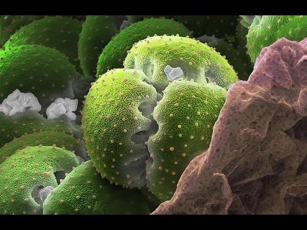 Дремучий лес в брокколи под микроскопом