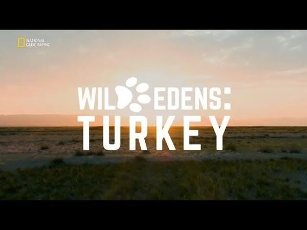 Vahşi Cennetler | National Geographic HD | Türkçe Belgesel