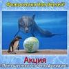 АКЦИЯ!  «Путешествие по дельфинарию»