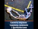 Скелеты мерзких чудовищ шокировали ростовчан на выставке эпатажной художницы