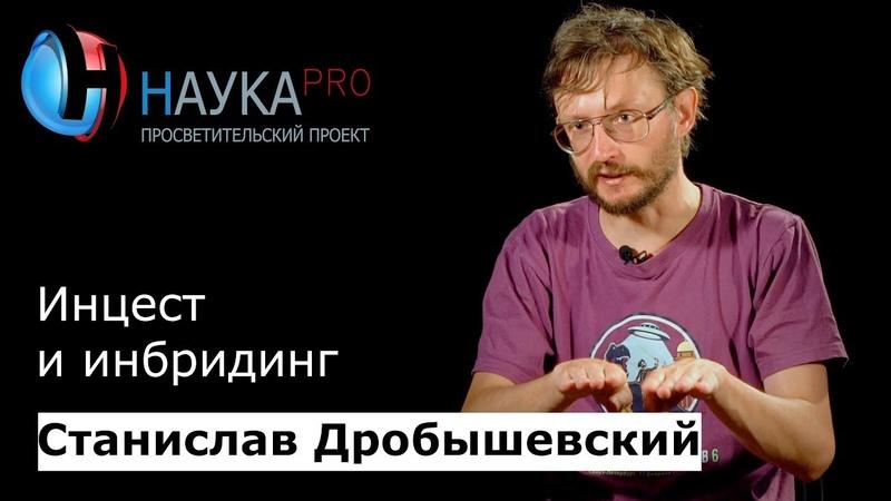 Станислав Дробышевский - Инцест и инбридинг