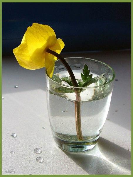 желтый цветочек в стакане с водой