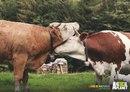 Реклама канала Animal Planet, посвященная Дню гордости: Любовь - это естественно