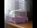попугайчик 🕊🐦