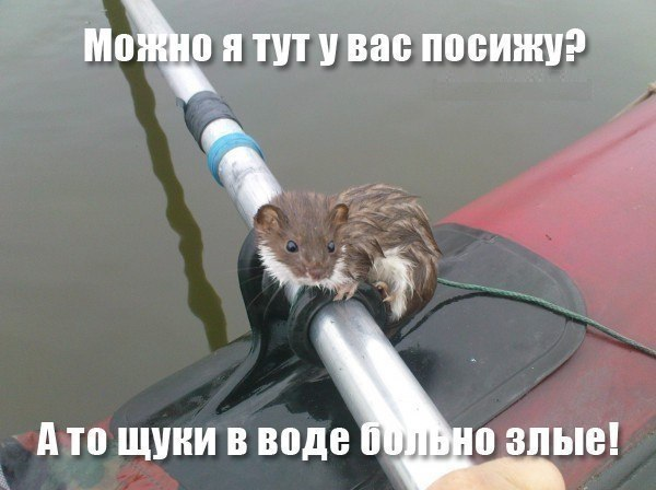 http://cs543104.vk.me/v543104682/244c5/76RHFXTBZTw.jpg