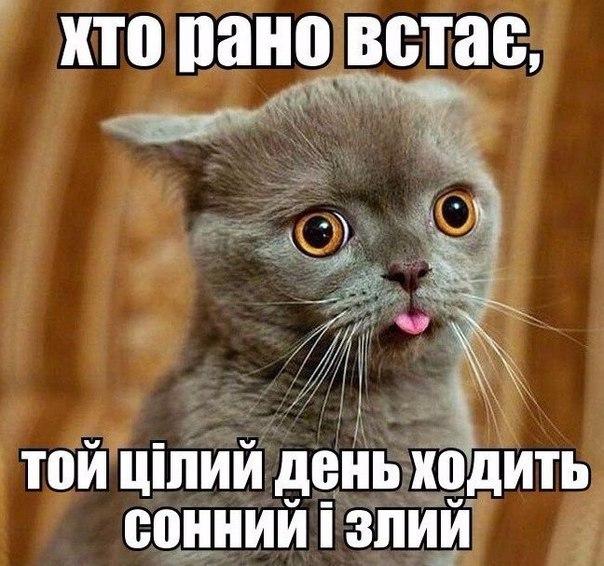 Глава антикоррупционной прокуратуры Холодницкий задекларировал 50 тыс. грн., $53 тыс., €12 тыс. наличкой - Цензор.НЕТ 3671