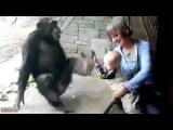Злая обезьяна и ребенок пофигист