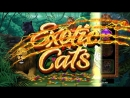 Exotic Cats Online Slot in