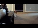 Лучшие видео приколы смешные свежие подборка новинки самые топ смотреть интересно смех веселая животные котики 2019 | Fun Gifs .