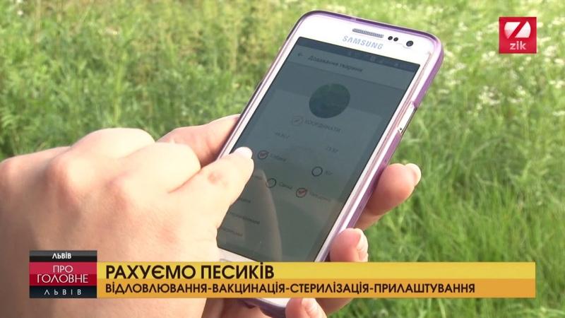 Львівські волонтери порахували вуличних псів
