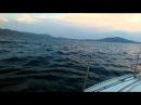 Крым 2014, чёрное море, дельфины
