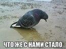 Дмитрий Власов фото #7