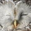 White Owl Игрушки ручной работы Гродно, Минск