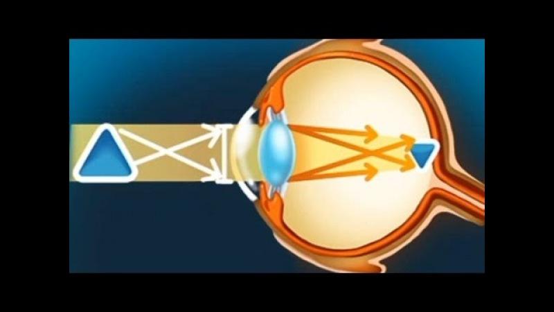 Глаз. Развивающий мультфильм о строении глаза для детей