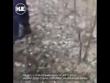 В Иркутской области медведь перегрыз собак в деревне
