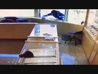 Оборонялись саблями: необычное ограбление ювелирного в Канаде — видео