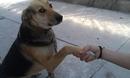 Эту собаку выбросили с девятью щенками. Голодную и напуганную…