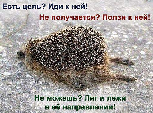 http://cs616216.vk.me/v616216105/15fe0/gdskFuWvbdw.jpg