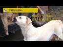 Душераздирающая картина прощания собаки со своим щенком