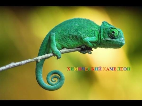 Химический хамелеон - подборка цветных химических реакций. [chemistry500]
